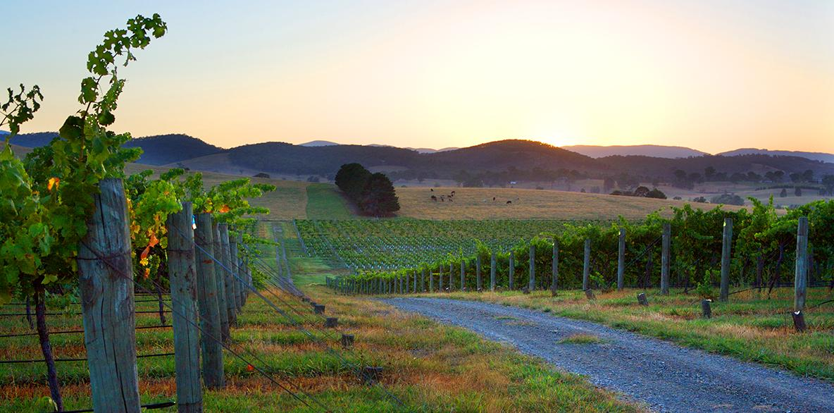 Mandala Vineyard-Sunset